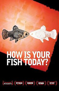 How is your fish today ?