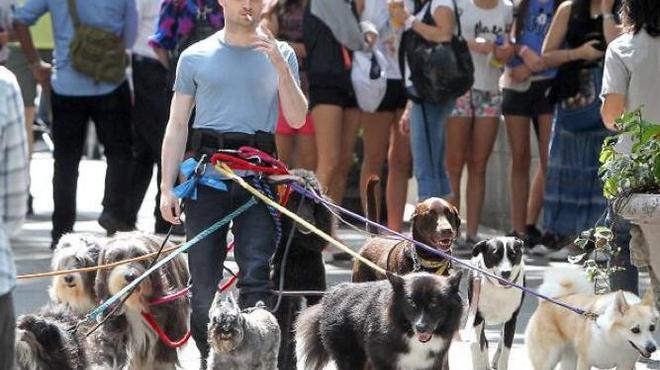 Daniel Radcliffe : promeneur de chiens pour Judd Apatow