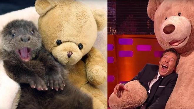 Benedict Cumberbatch élu meilleur imitateur de loutres de l'année !