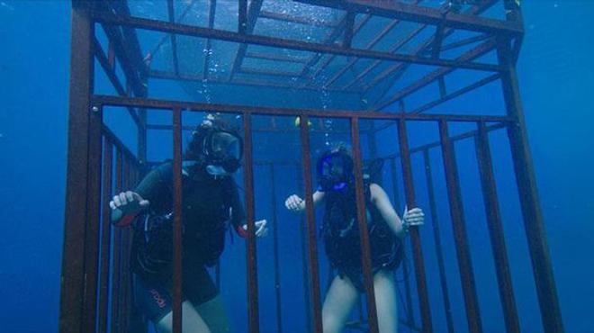 47 Meters Down : on sait quand sortira la suite !