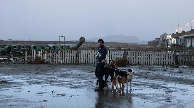 Dogman : les chiens de la casse
