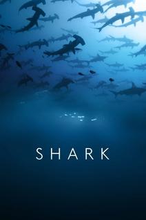 Requins : à bas la mauvaise réputation !