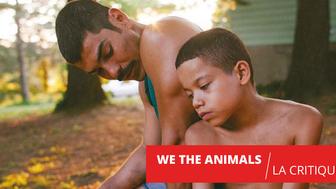We The Animals : le nouveau Moonlight ?