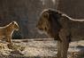 Le Roi Lion mardi 7 avril sur Canal + : savez-vous quel plan du film n'est pas en CGI ?