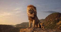 Le Roi Lion : Disney lance une suite pour le live-action, avec un nouveau réalisateur