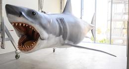 Les Dents de la mer : le dernier modèle existant du requin rentre au musée