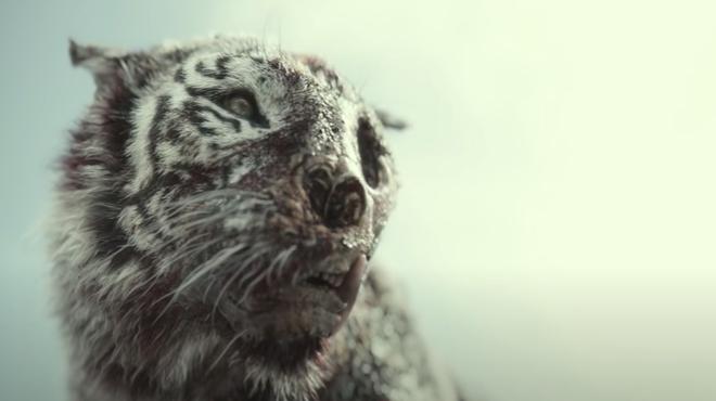 Army of the Dead : à quoi ressemble Valentine (le tigre zombie) sans les effets spéciaux ?