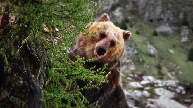 L'Ours sur 6ter : ce jour où Jean-Jacques Annaud a frôlé la mort sur le tournage